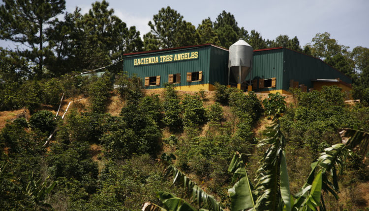 Hacienda Tres Angeles. Adjuntas, Puerto Rico, Coffee, Attraction