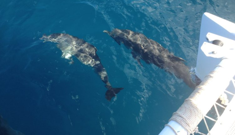 Whale Watching Tours, Rincón, Puerto RIco